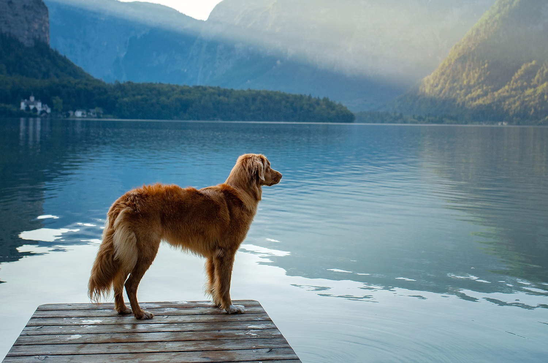 Wanda Hundefutter Adult Sensibel Lamm und Reis